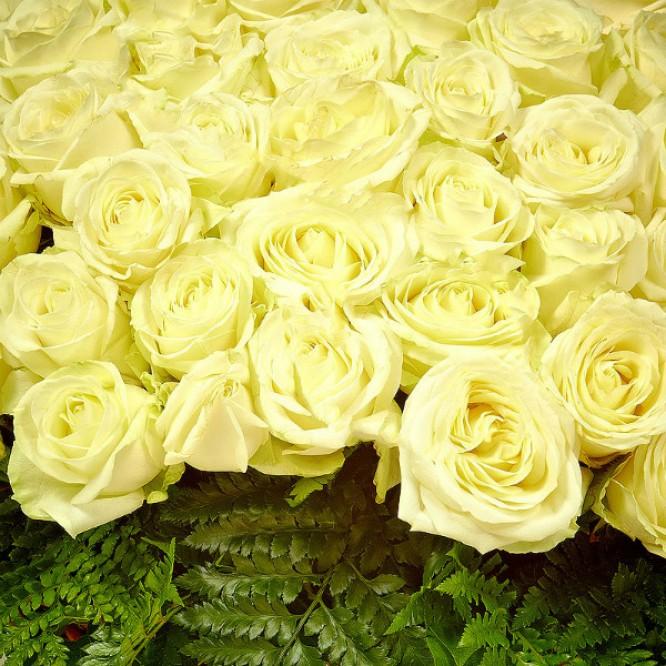 Букет-корзина из белых роз (201 шт.), салала и папоротника №27