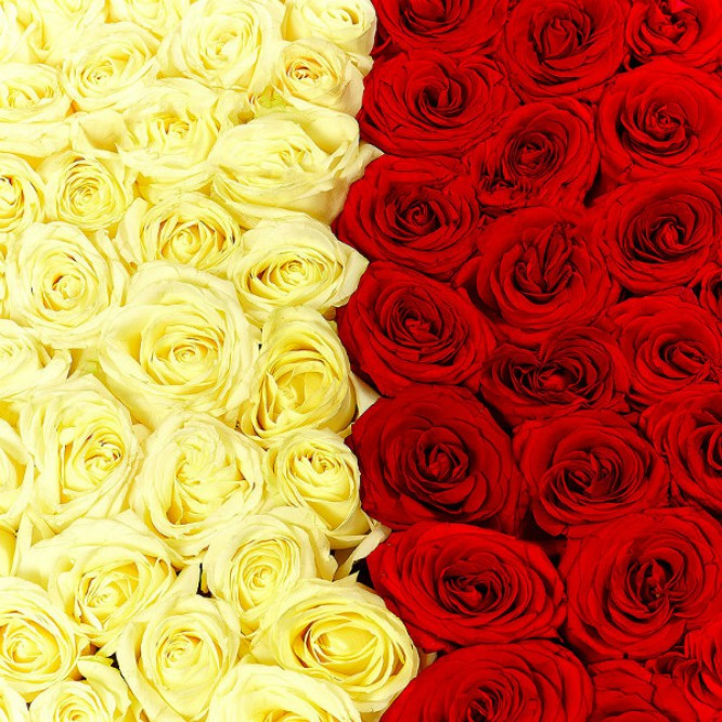 Букет-сердце из белых и красных роз №30 (151 шт.)