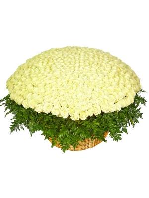 Букет-корзина из белых роз (501 шт.) и папоротника №36
