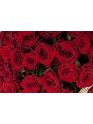 Букет-корзина из красных роз (101 шт.) №91