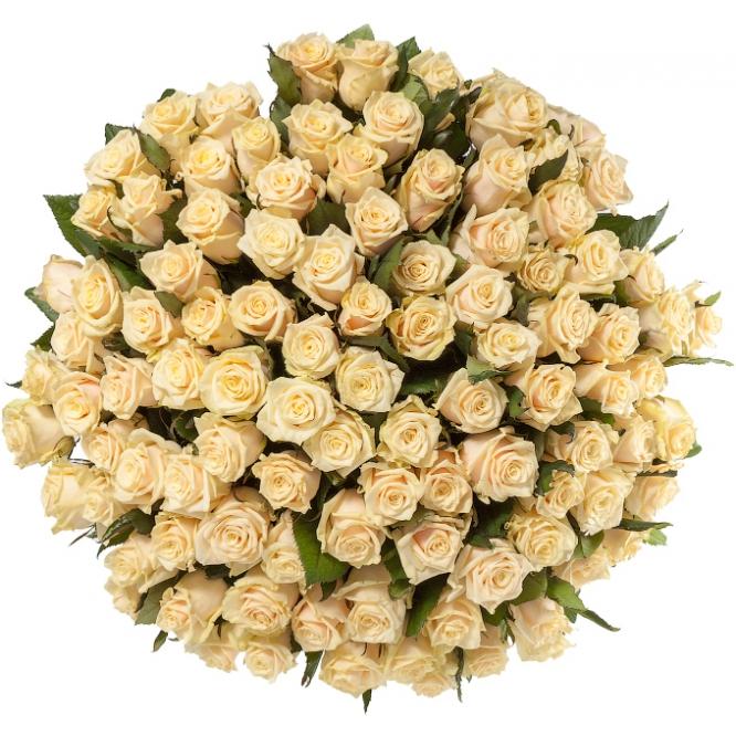 """Букет цветов из нежнокремовых роз """"Талея"""" (101 шт.) №114 с доставкой."""
