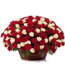 Букет-корзина из красных и светло-кремовых роз (201 шт.) №92