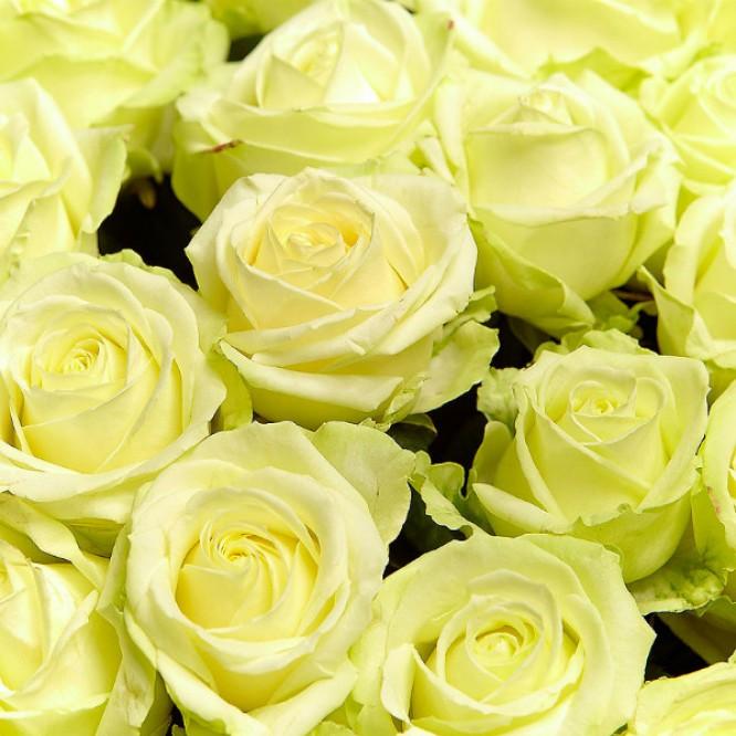 Букет цветов из белых роз №14 (101 шт.) с доставкой.
