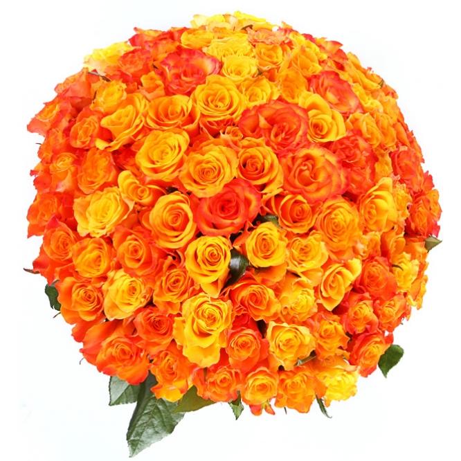 оранжевые розы фото букеты