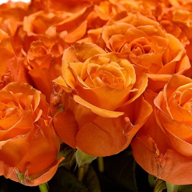 Букет цветов из рыжих роз №14 (51 шт.) с доставкой.