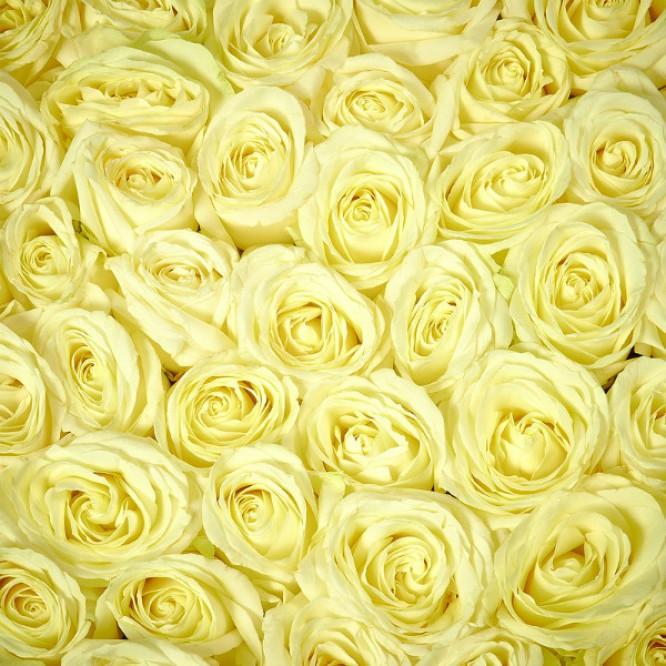 Букет-сердце из белых роз №2 (45 шт.)