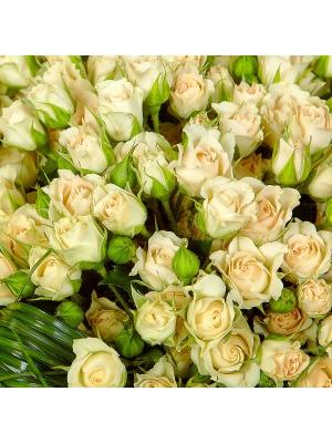Букет цветов из кремовых кустовых роз №17 (25 шт.) с доставкой.