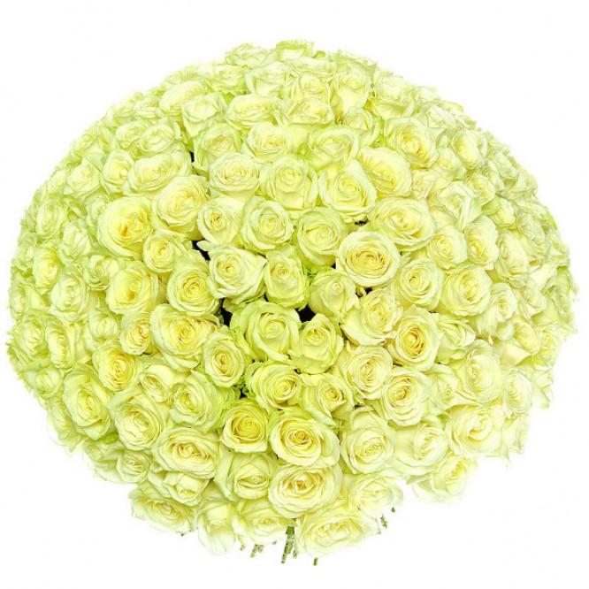 Букет цветов из белых роз №22 (201 шт.) с доставкой.