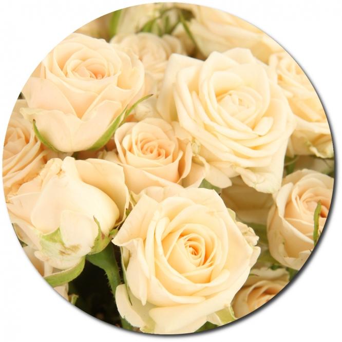 Поштучно кремовые розы (экстра класс, 70 сантиметров) с доставкой по Киеву.