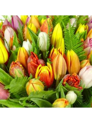 Букет цветов из разноцветных тюльпанов (101 шт.) и амбреллы №11 с доставкой.