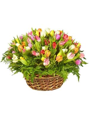 Букет-корзина из разноцветных тюльпанов (101 шт.) и папоротника №55