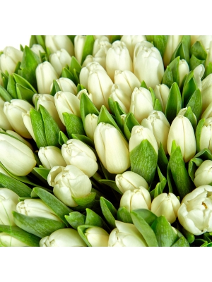 Букет цветов из белых тюльпанов (101 шт.) №17 с доставкой.