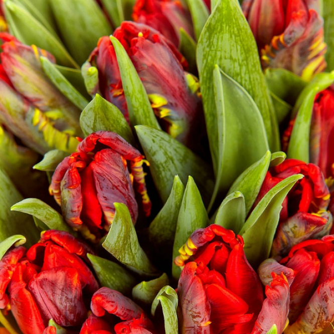 Букет цветов из разноцветных тюльпанов (25 шт.) №20 с доставкой.