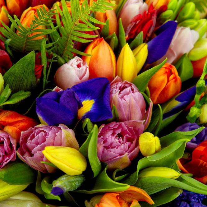 Букет цветов из разноцветных тюльпанов, синих ирисов, желтой альстромерии, фрезии и леукодендрона №35 с доставкой.
