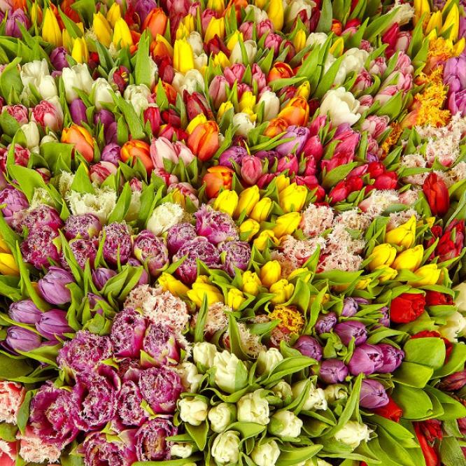 Букет-корзина из разноцветных тюльпанов (1001 шт.) и папоротника №58
