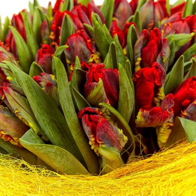 Букет цветов из разноцветных тюльпанов (101 шт.) №51 с доставкой.
