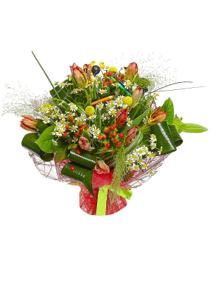 Букет цветов из разноцветных тюльпанов, ромашек, красного гиперикума, аспидистры и желтой краспедии №52 с доставкой.