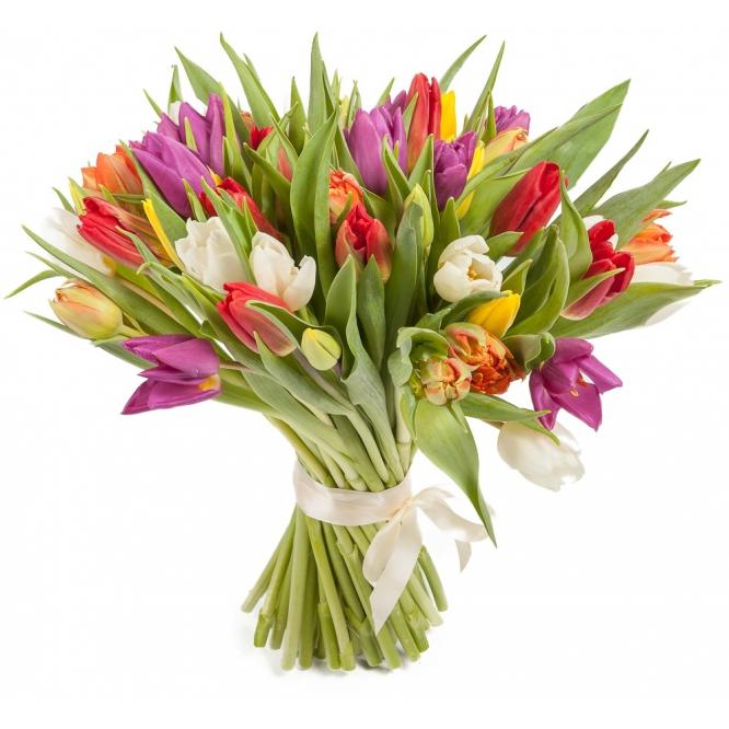 Букет цветов из разноцветных тюльпанов (51 шт.) №61 с доставкой.
