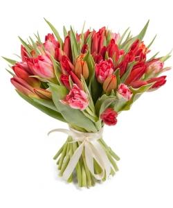 Букет цветов из красно-розовых тюльпанов (51 шт.) №62 с доставкой.