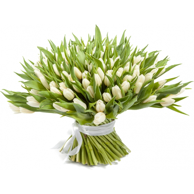 Букет цветов из белых тюльпанов (151 шт.) №63 с доставкой.