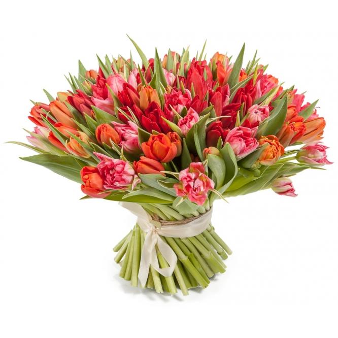 Букет цветов из красно-розовых тюльпанов (101 шт.) №67 с доставкой.
