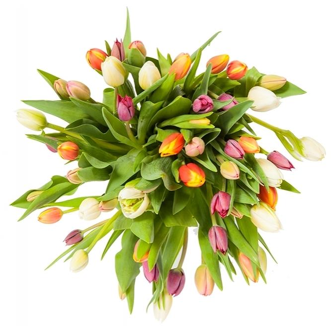Букет цветов из разноцветных тюльпанов двух сортов (41 шт.) №69 с доставкой.