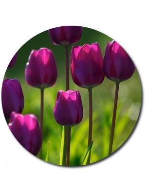 Поштучно фиолетовые тюльпаны с доставкой по Киеву.