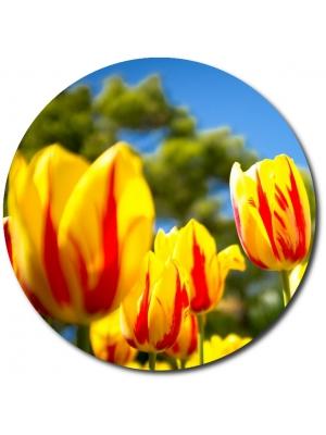 Поштучно желтые в красную полоску тюльпаны с доставкой по Киеву.