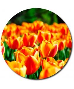 Поштучно красно-оранжевые тюльпаны с доставкой по Киеву.