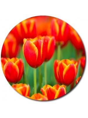 Поштучно красные из желтой каемкой тюльпаны с доставкой по Киеву.