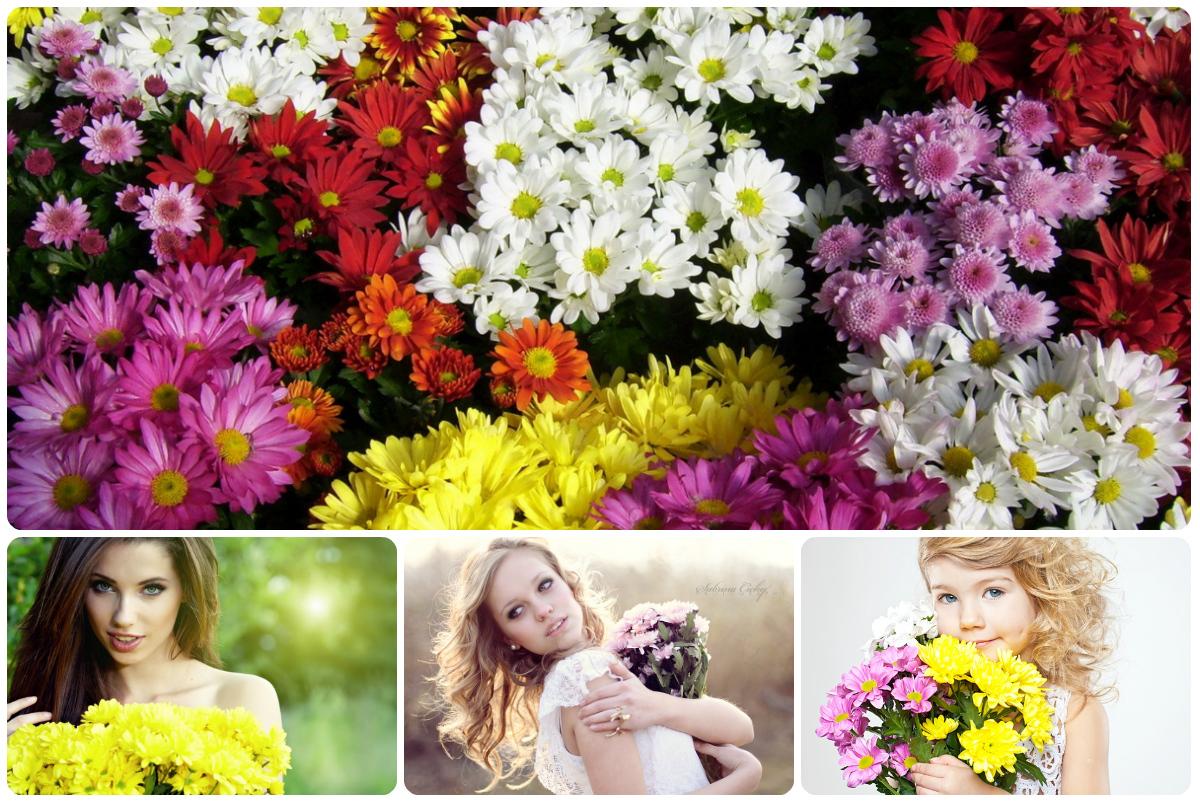 Купить букет хризантемы в Киеве с доставкой. Низкая цена, быстрая доставка.