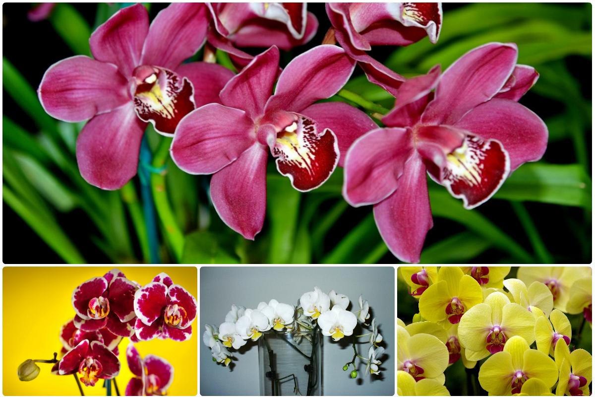Купить букет из орхидеи в Киеве. Низкая цена, быстрая доставка.