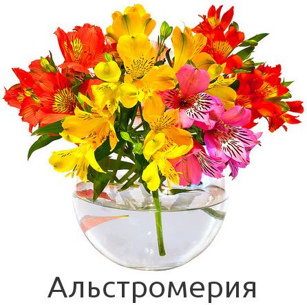 Купить альстромерию в Киеве с доставкой. Низкая цена.