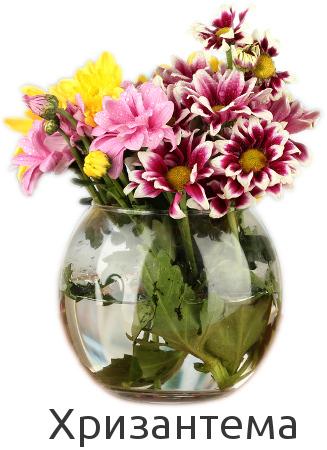 Купить хризантему в Киеве по низкой цене. Быстрая доставка.
