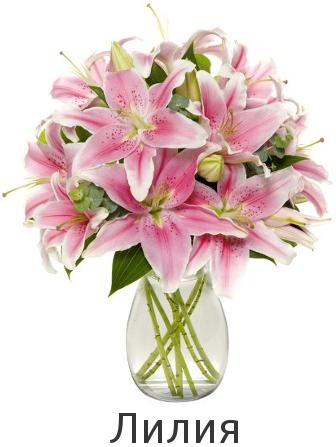 Купить лилию в Киеве по низкой цене. Быстрая доставка.